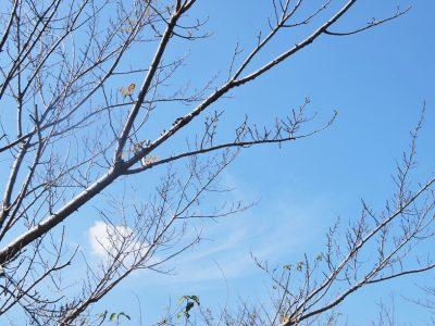せいかつ緑化計画【散りゆく風景、落ち葉のじゅうたん「落葉樹」】