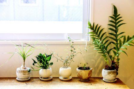 観葉植物のの植替えタイミングとは