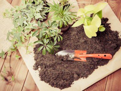 せいかつ緑化計画【観葉植物の植替えのタイミング】