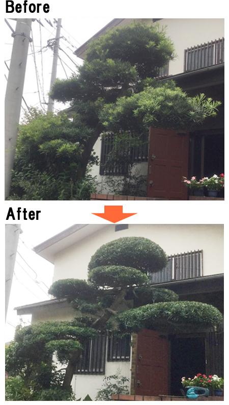 の 剪定 時期 まき 木 の フェイジョアを剪定する方法と時期・お手入れ簡単なシンボルツリー|お庭ブログ