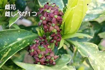 aoki_mebana