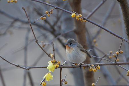 bird-3287157_1920