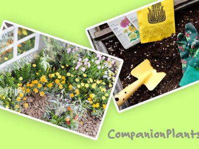 自然の力で植物を元気に!「コンパニオンプランツ」