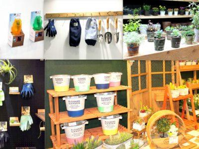せいかつ緑化計画【秋冬のお庭をカラフルに彩る「ガーデニンググッズ」】