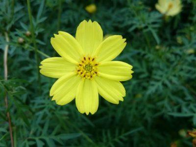 せいかつ緑化計画【美しい花を長く 楽しむ「切り花を長持ちさせる方法」】