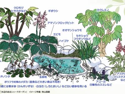 せいかつ緑化計画【日陰でも育つ植物】
