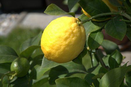 lemon-50348_1920