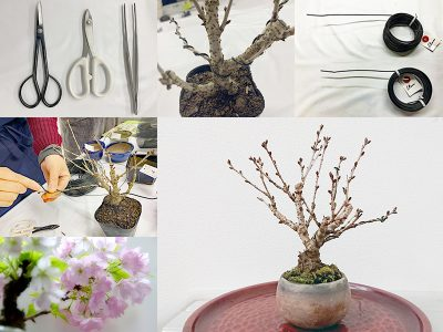 針金かけに挑戦!桜のミニ盆栽