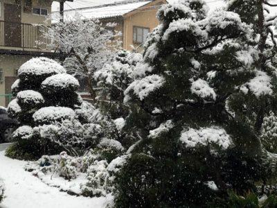 せいかつ緑化計画【冬の到来前に「お庭の冬支度」】