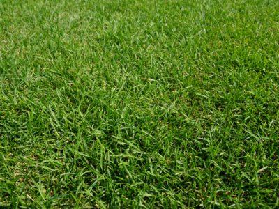 せいかつ緑化計画【青々とした芝庭を手に入れよう!「お手入れ編」】