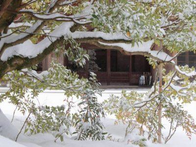 備えて安心!庭木の積雪対策